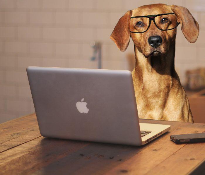 dog-food-bought-online