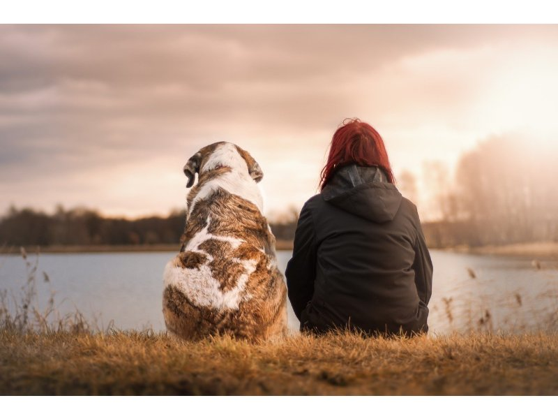 mans best friend - pet insurance for dogs