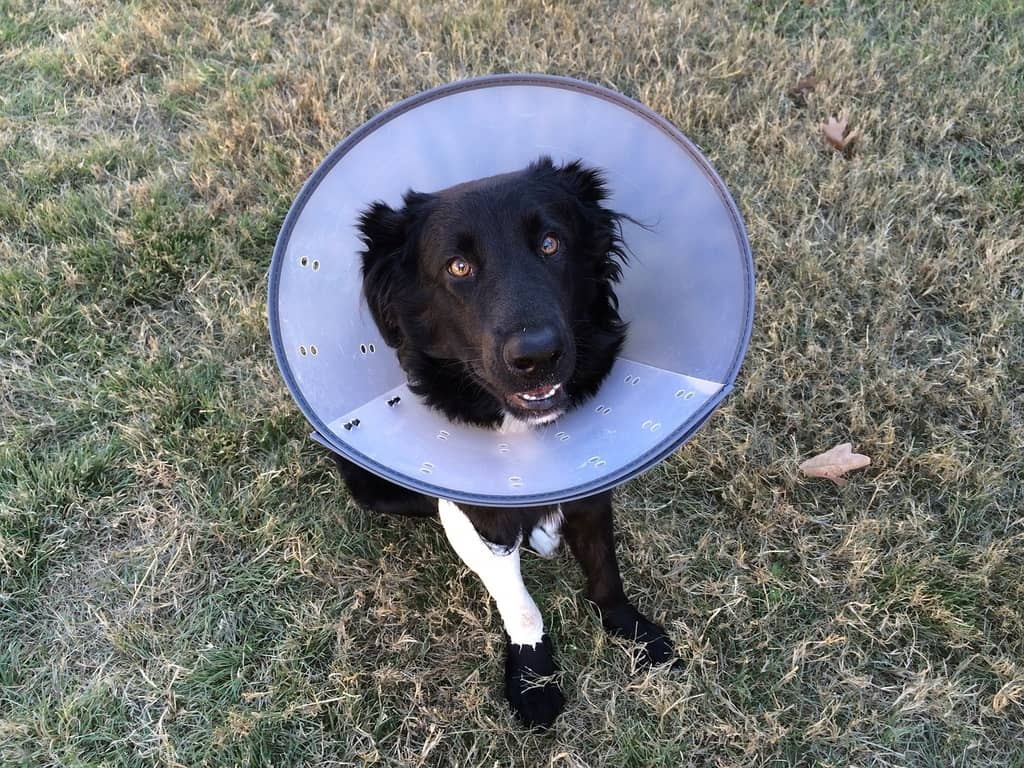 cone on dog - medical aid