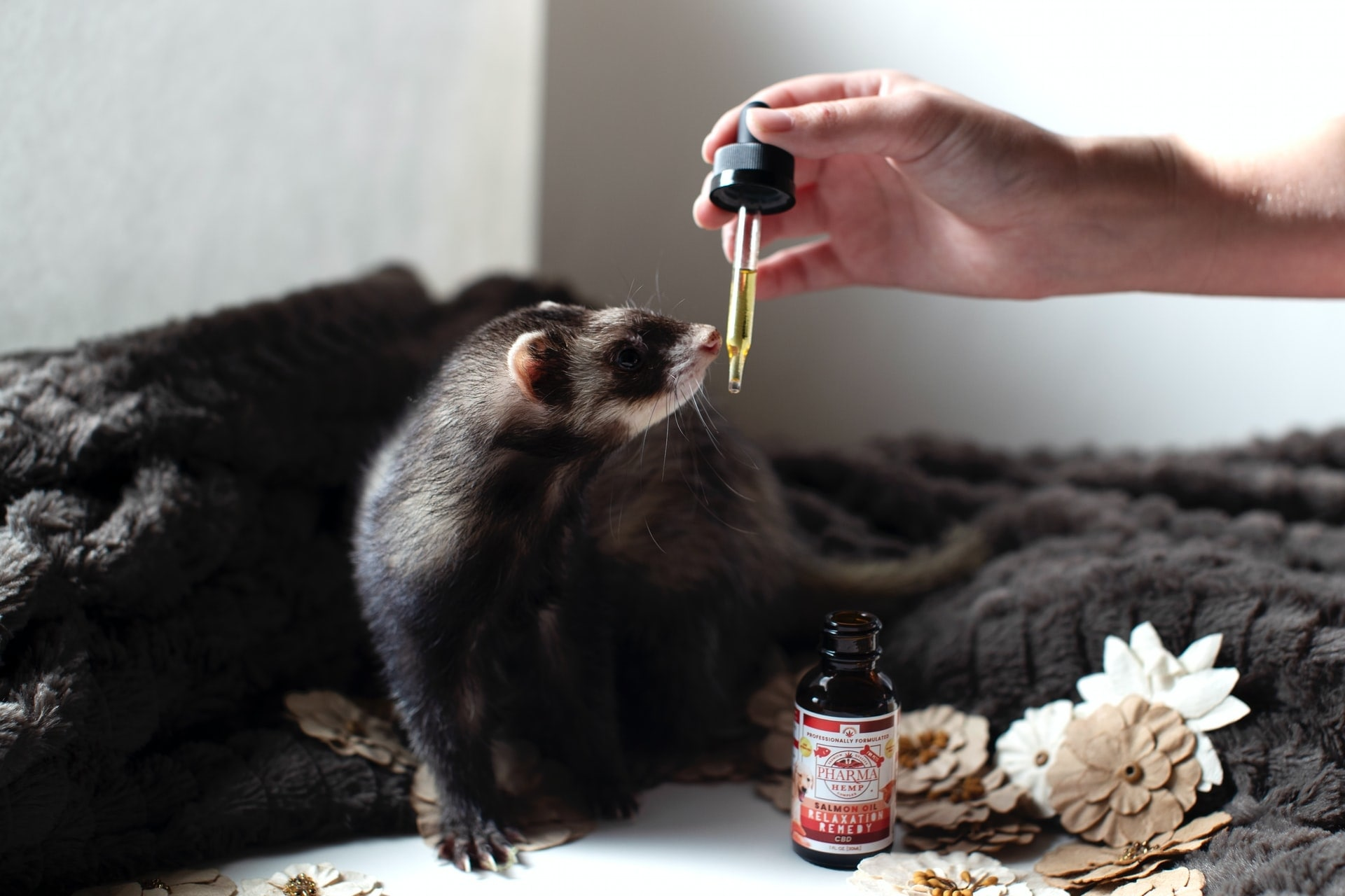 cbd-oil-for-pets