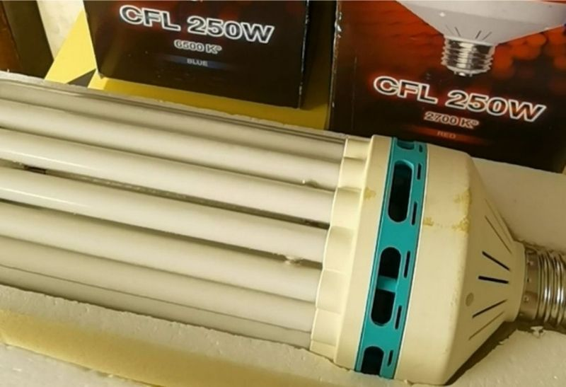 red and blue cfl grow lights