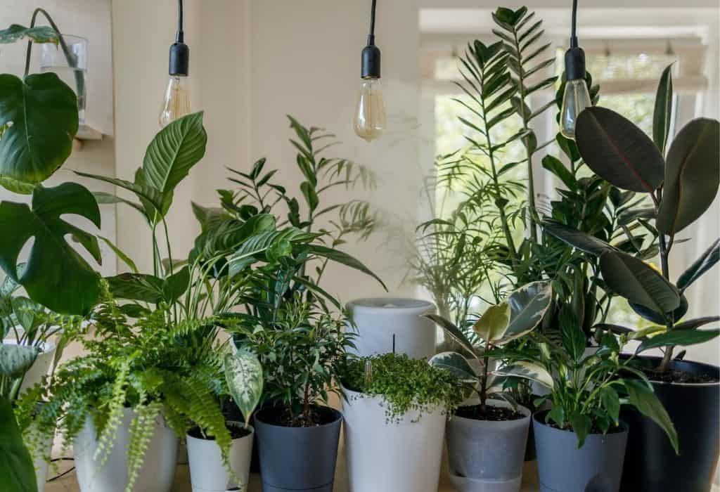 indoor plants under grow lights