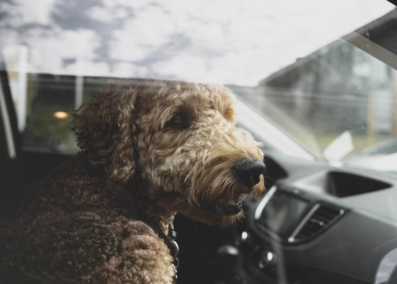 Dog in passenger seat